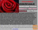 VEDEŽEVANJE-POMOČ V STISKI-VRNITEV PARTNERJA 0904177