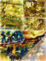 Prodamo grozdje (modro in belo jurko)